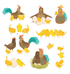 cute cartoon cock family set isolated on white vector image