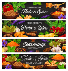 Herbs spices fresh food seasoning and condiment vector