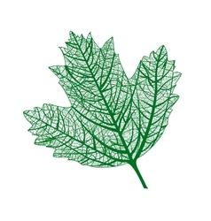 leaf isolated Natural macro leaf vector image