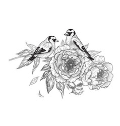 hand drawn goldfinches sitting on peony branch vector image