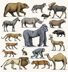 gorilla moose or eurasian elk camel and deer vector image