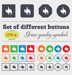 Camel icon sign Big set of colorful diverse vector image