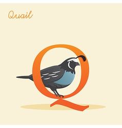 Animal alphabet with quail vector image vector image