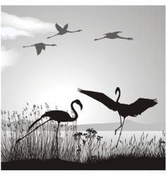flamingo silhouettes vector image vector image