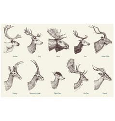 big set horn antlers animals moose or elk vector image