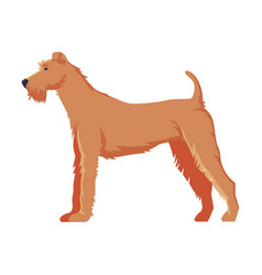 Fox terrier purebred dog pet animal side view vector