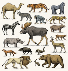 Gorilla moose or eurasian elk camel and deer vector