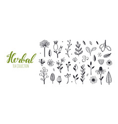 herbal tea and floral doodle set hand vector image