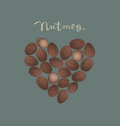 nutmeg spice in a heart shape vector image