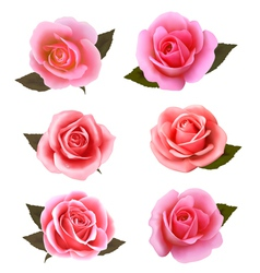 Set of beautiful pink roses vector