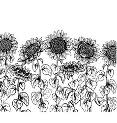 set of hand drawn graphic sunflower vintage sketch vector image