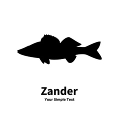 silhouette of zander vector image