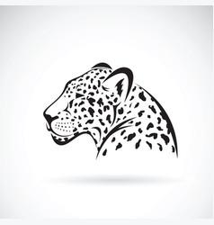 leopard on white background wild animals vector image
