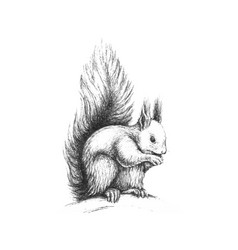 Hand drawn wild forest squirrel vector