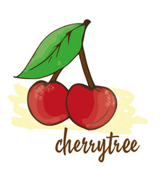 cherry is hand-painted vector image