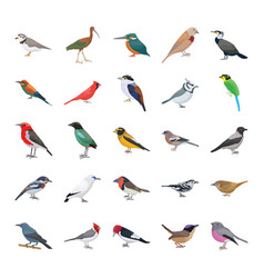 Birds flat icons collection vector