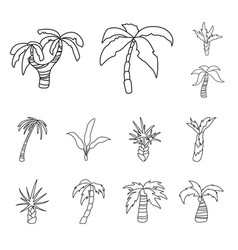 design tropical and summer symbol set vector image