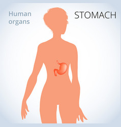 location of the stomach in the female body vector image