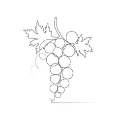 one line drawing grape sketch vector image