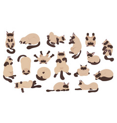 Sleeping cats poses flat color simple style vector