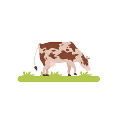 spotting cow grazing in green meadow vector image