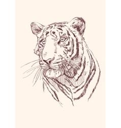 Tiger hand drawn vector