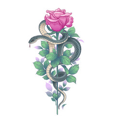 twisted snake and pink rose on high stem vector image