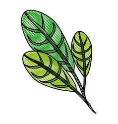 Color blurred stripe image green leaves with vector