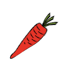 carrot vegetable natural vector image