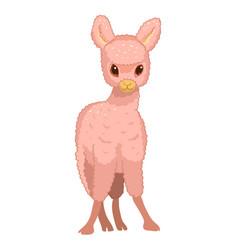 llama cartoon alpaca lama animal isolated vector image