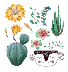Potted cacti and succulents plants badge vector