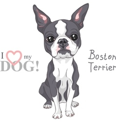 Sketch dog Boston Terrier breed serious vector