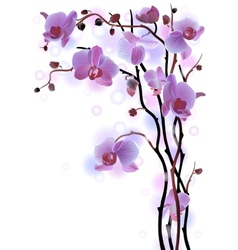 Vertical background with violet orchids vector image