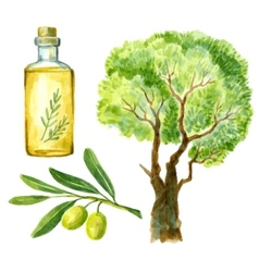 watercolor hand drawn olive vector image