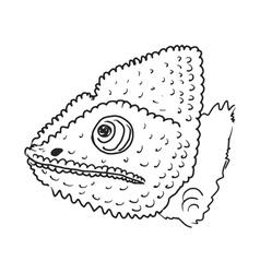 chameleon vector image vector image