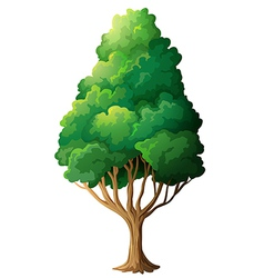 A tall old tree vector image