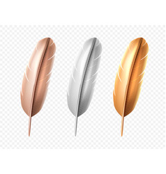 set isolated bird realistic feather quill vector image
