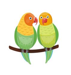 cartoon tropical lovebird parrot wild animal bird vector image