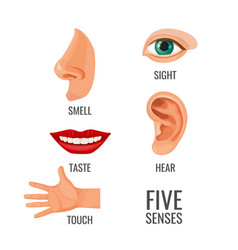 Five senses with titles at body parts vector