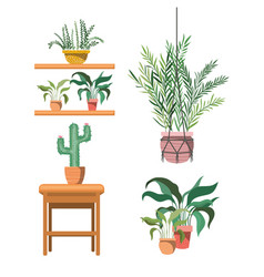 Houseplants on macrame hangers and table vector