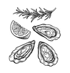 oysters ink sketch vector image