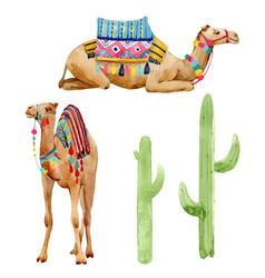 watercolor camel vector image