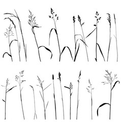 wild cereal plants vector image vector image