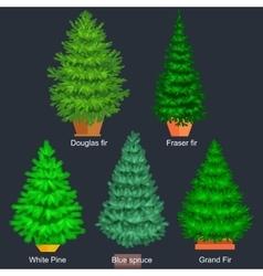 Set of potted christmas tree like fir or vector image vector image