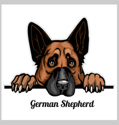 Color dog head german shepherd breed on white vector