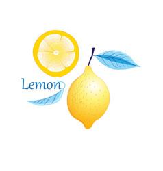Fruit yellow lemon vector
