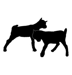 Goats romping vector image