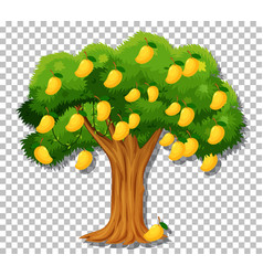 Mango tree on transparent background vector