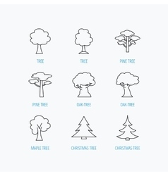 Pine tree maple and oak icons Christmas tree vector