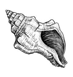 Seashell handdrawn sketch vector